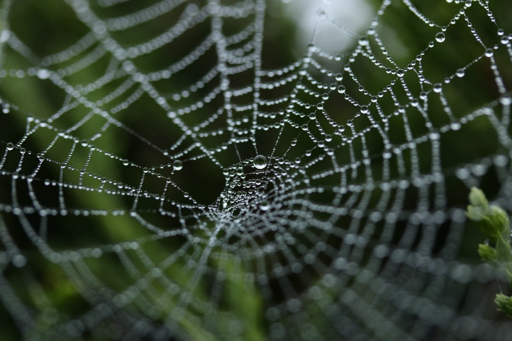 Are You A Target Thinker Or A Spider Web Thinker Disruptive